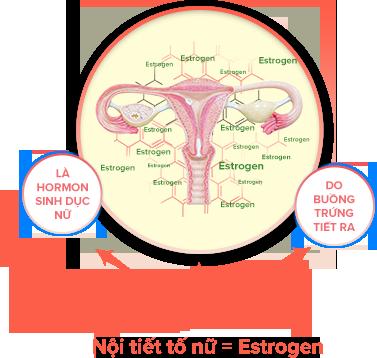 Estrogen thảo dược - bí quyết duy trì tuổi xuân của phái đẹp